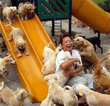 From Los 10 mandamientos de un perro (leelo por favor)