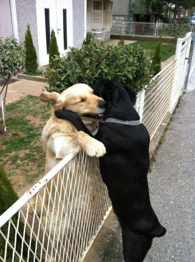 """From Click """"like"""" if you love your dog"""