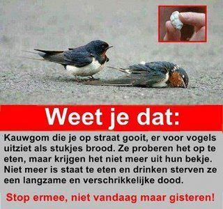 From Marianne van der Ven