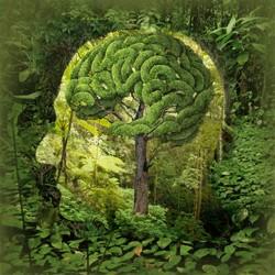 brainforest_th