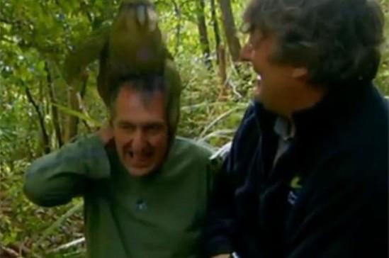 Kakapo humps zoologist