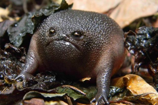 blackrainfrog
